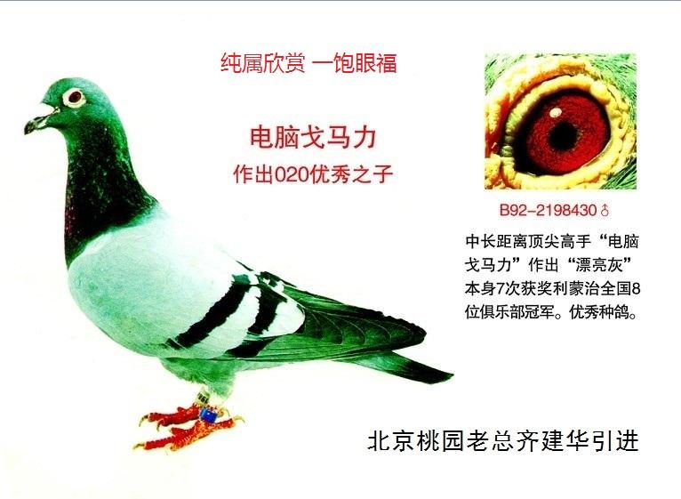 宝鸽电动车电路图