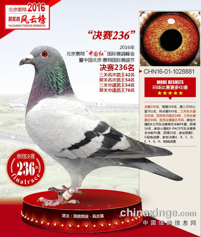 惠翔236