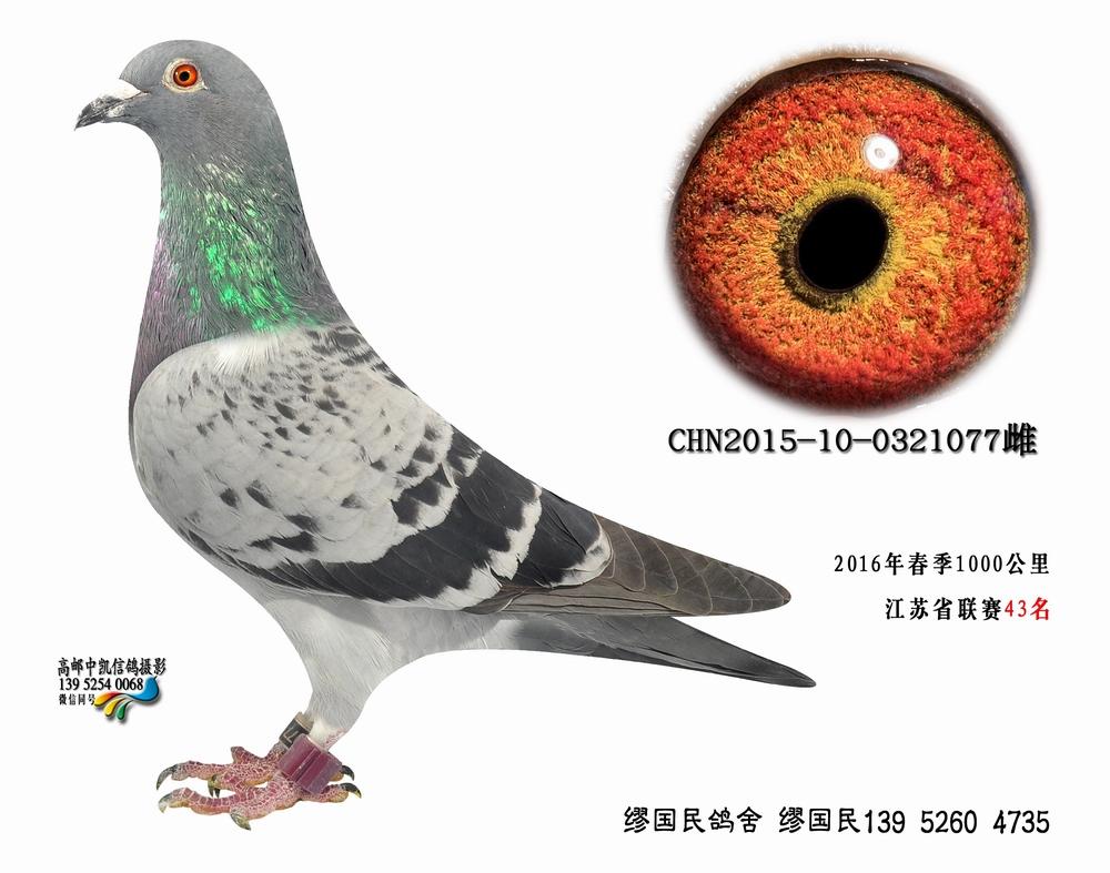 杨龚多拉斯077