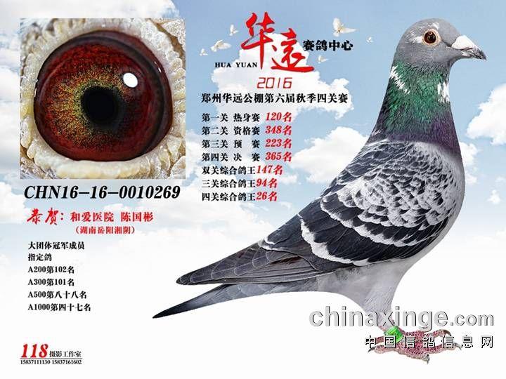 2016郑州华远决赛365名