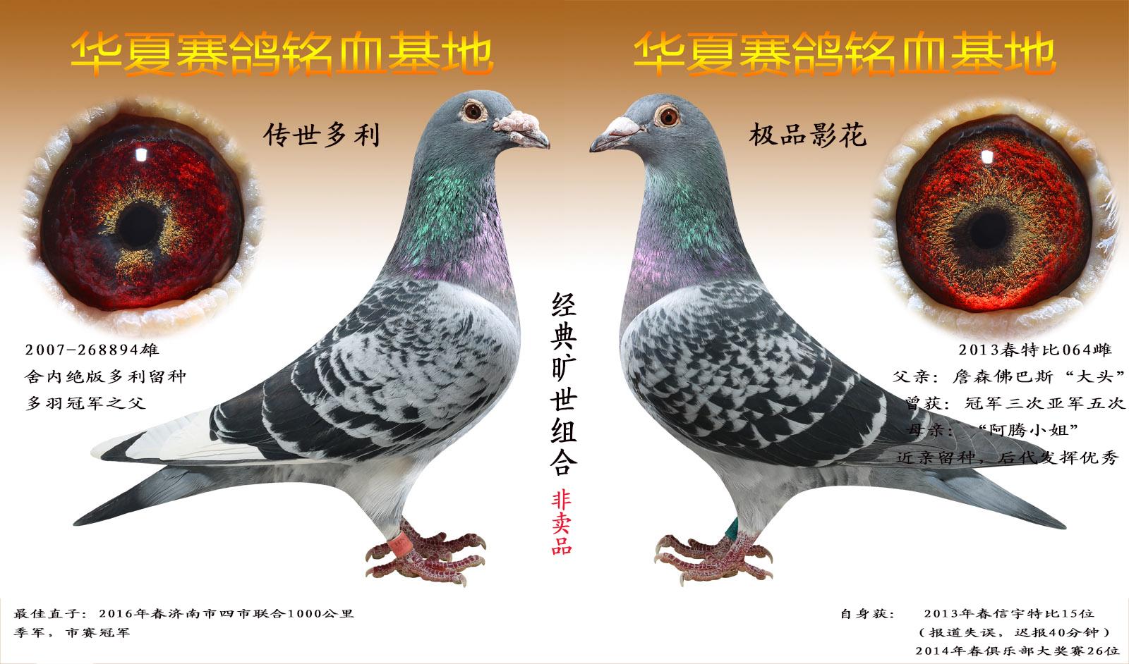 杨阿腾经典组合(仅供观赏)
