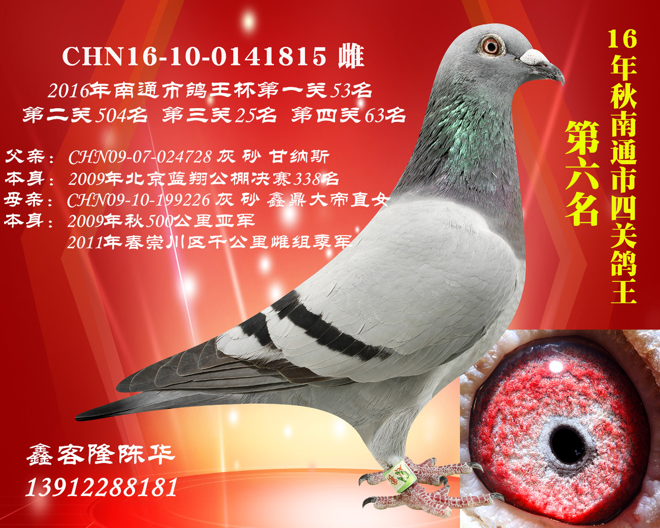 四关鸽子6名已售河北荆州陈总
