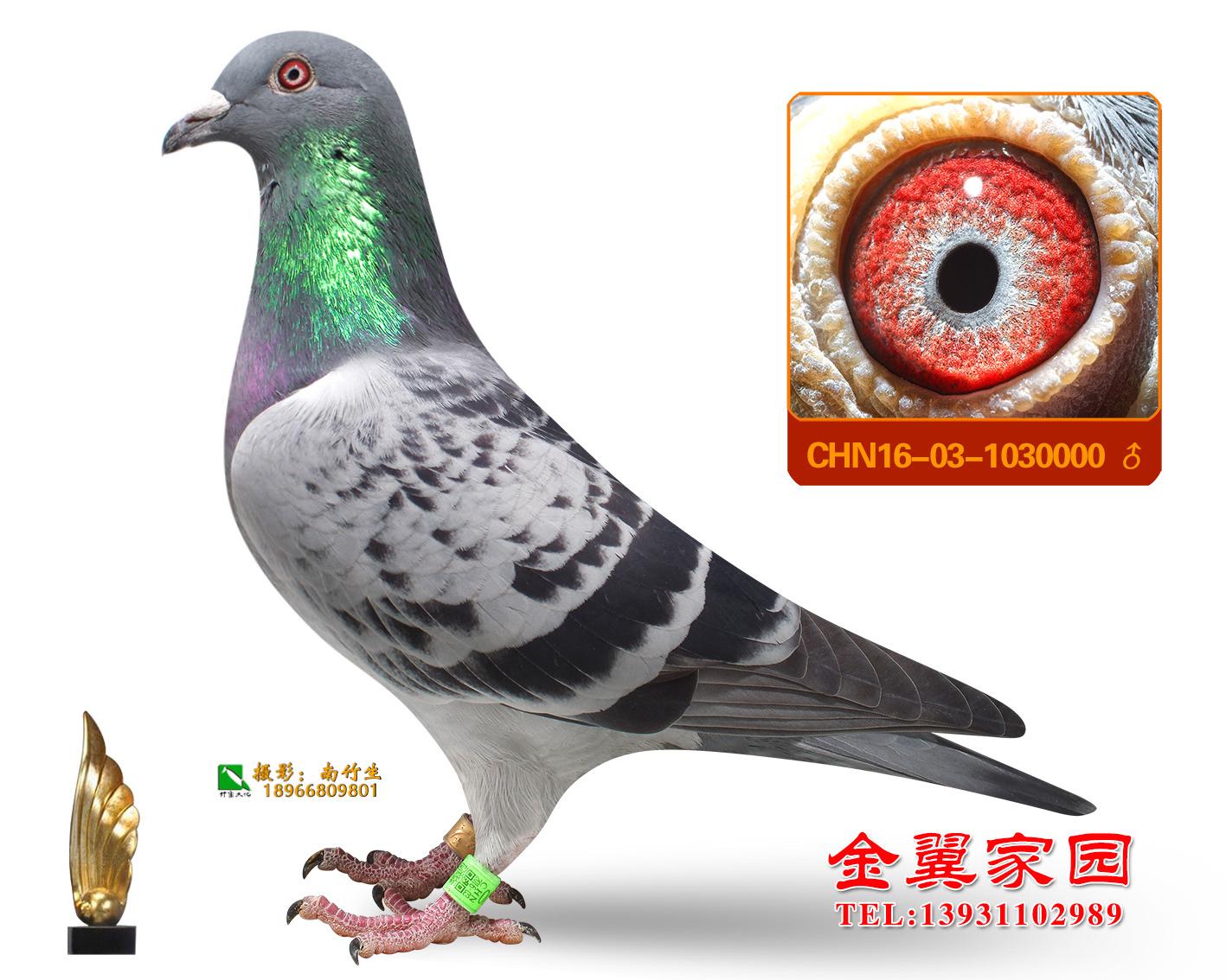 胡本_金翼家园石家庄分舍_ag188.com爱鸽商