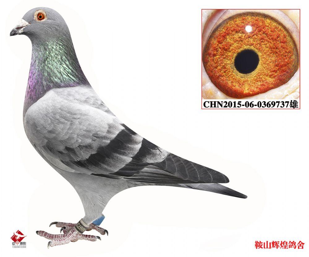 字数鸽教学鲸鱼签约鸟动物1000_833鸽子申请阅读图示鸟类图片