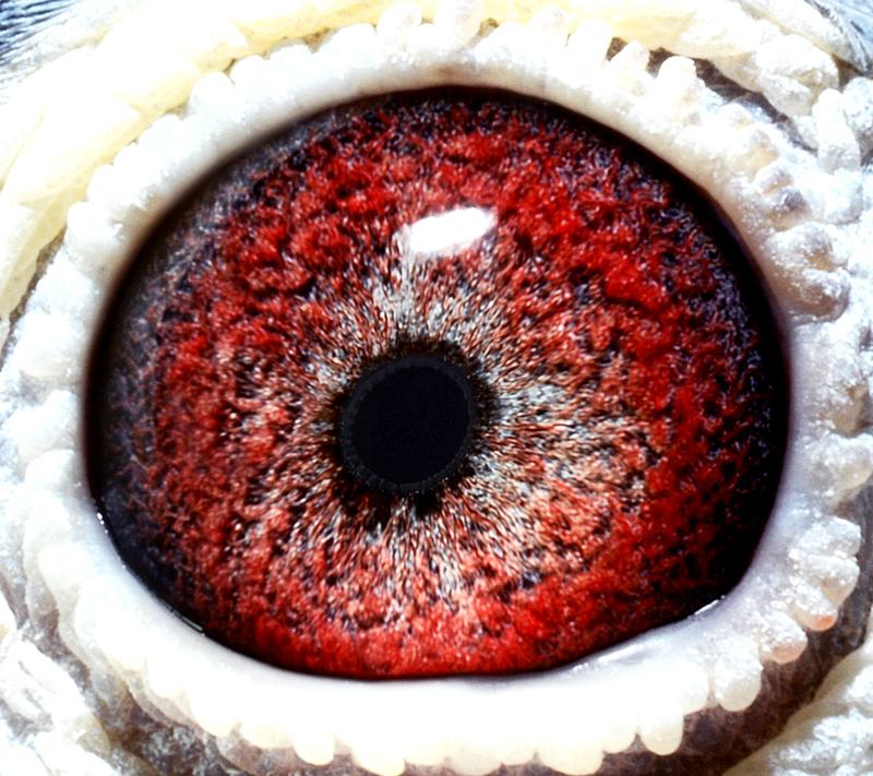 眼神闪电特效素材