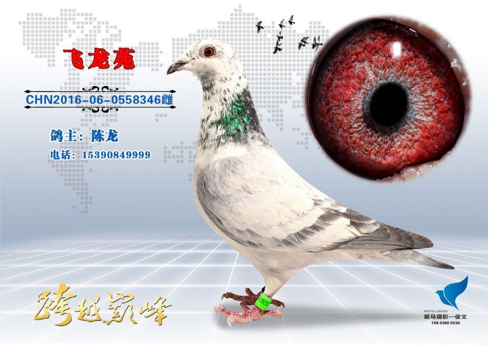 大庆浩宇公棚决赛《季军》