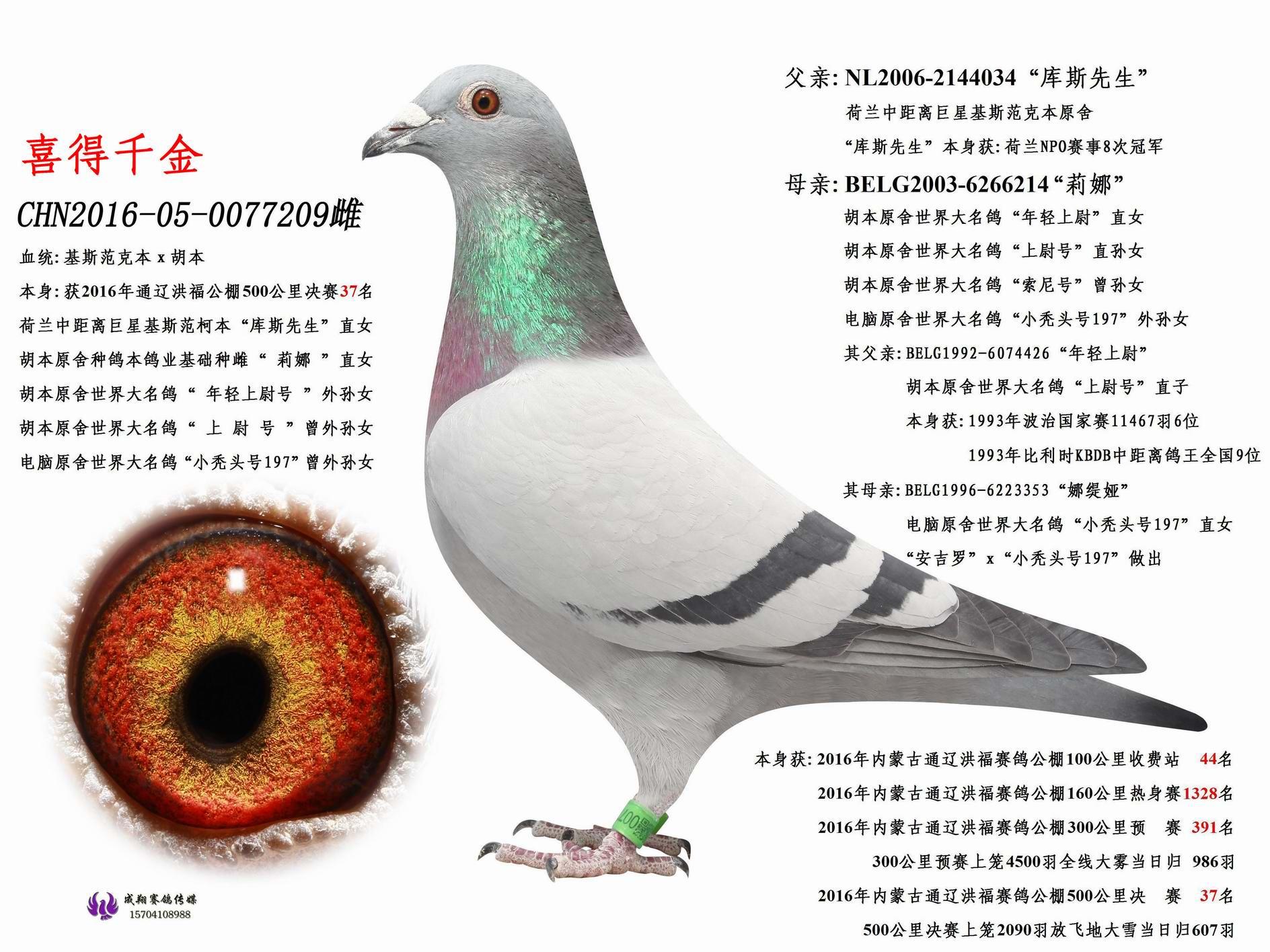 """""""喜得千金""""本身公棚决赛37名"""