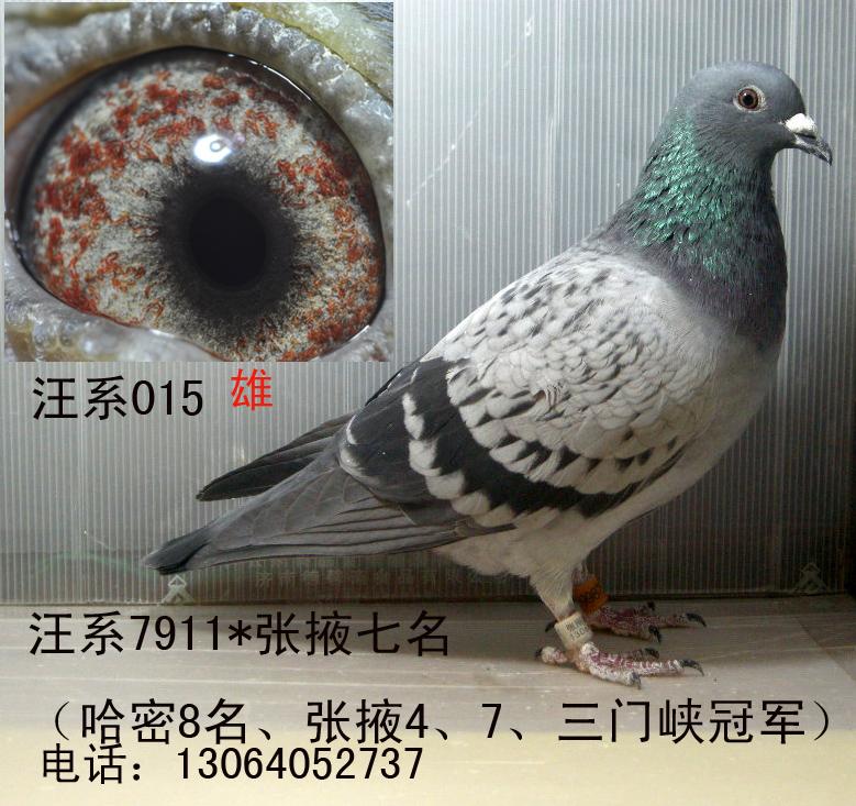 汪系(吴淞)老白眼