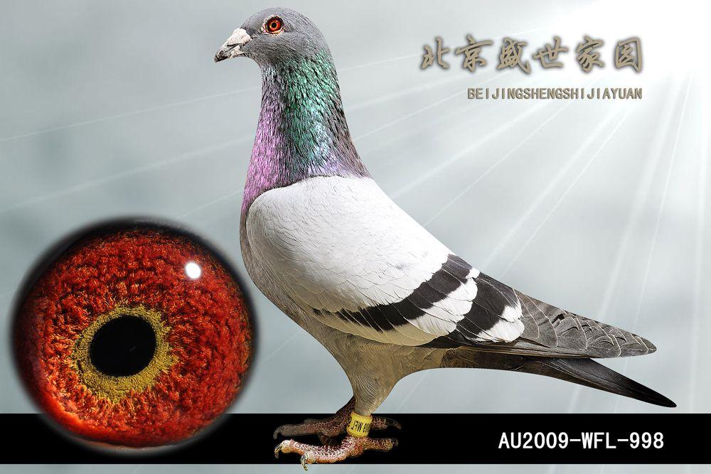 AU2009-WFL-998