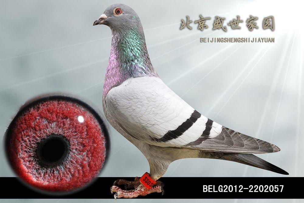 BELG2012-2202057