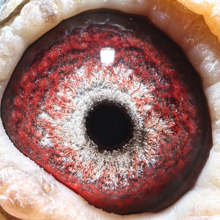 501044眼睛