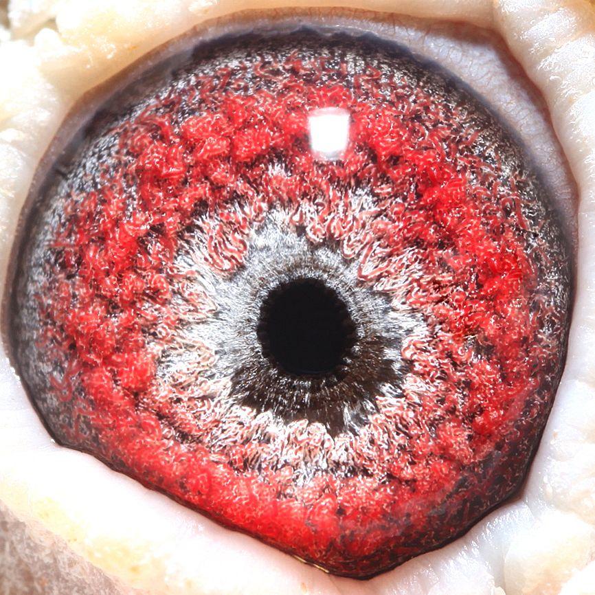 615007眼睛