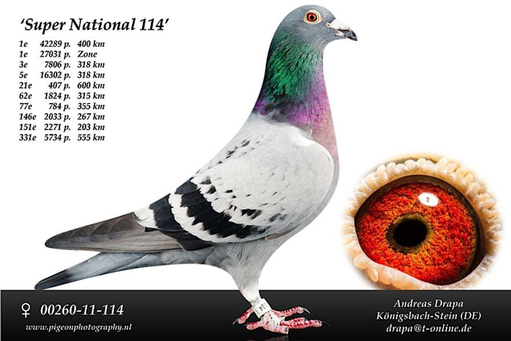 超级国家号114