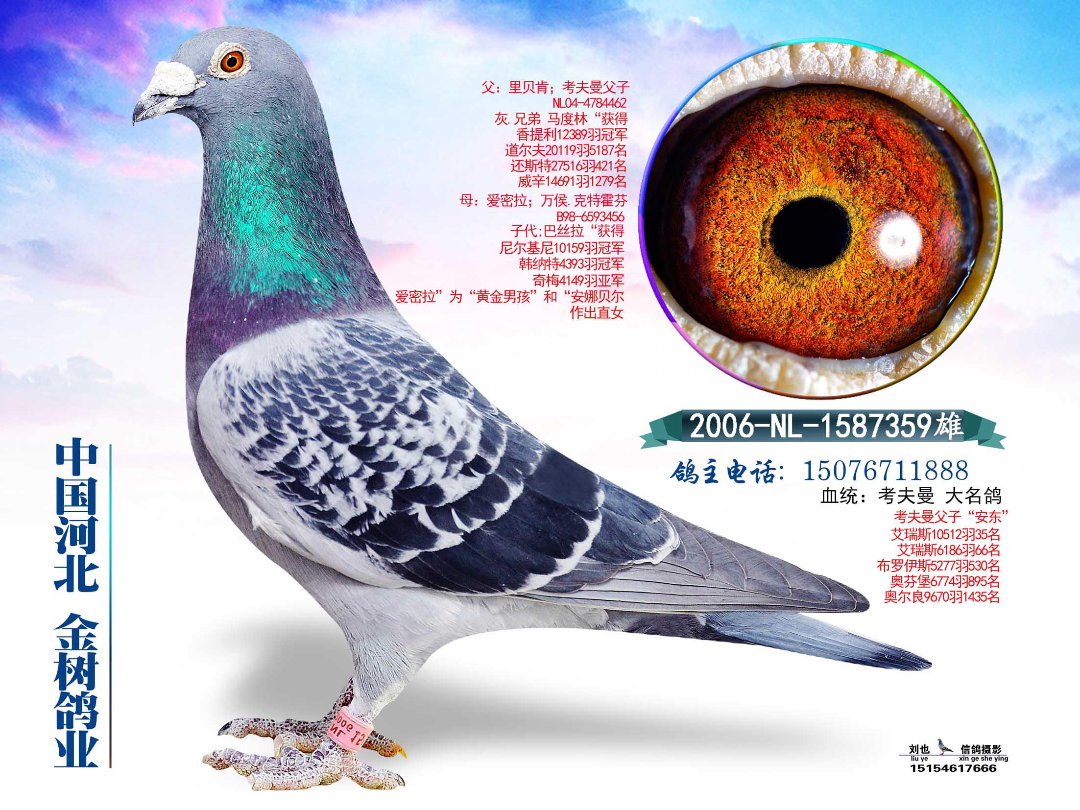 考夫曼大名鸽'爱蜜拉'直子
