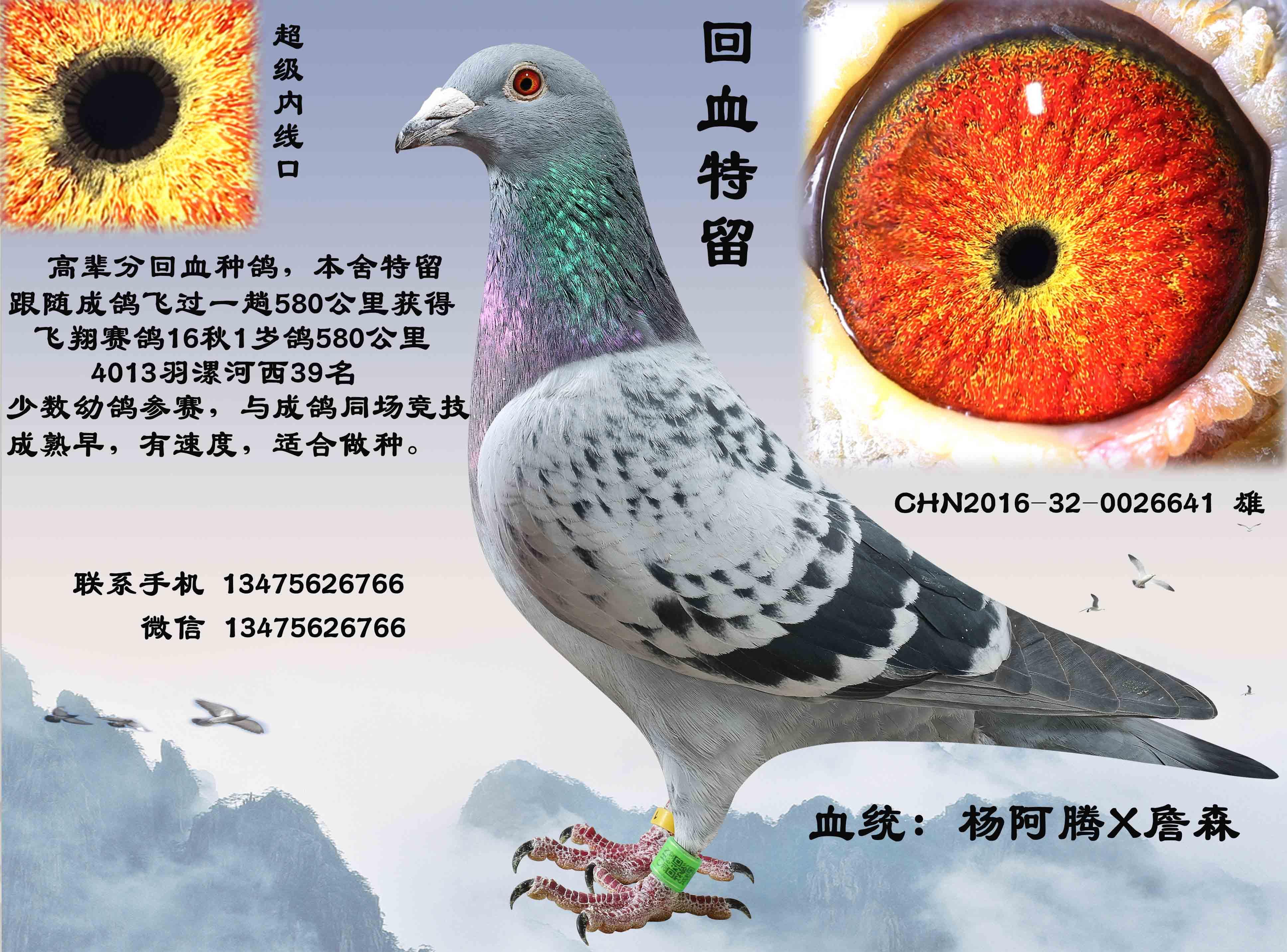 教学鸽动物大象演奏鸟乐曲3872_2865七下乐器音乐鸽子用什么鸟类图示图片