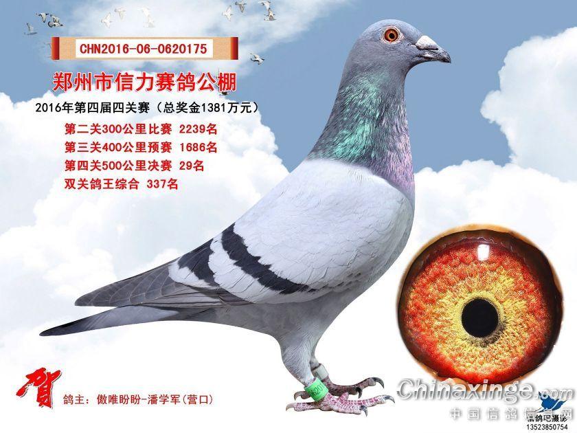 郑州信力公棚决赛29名