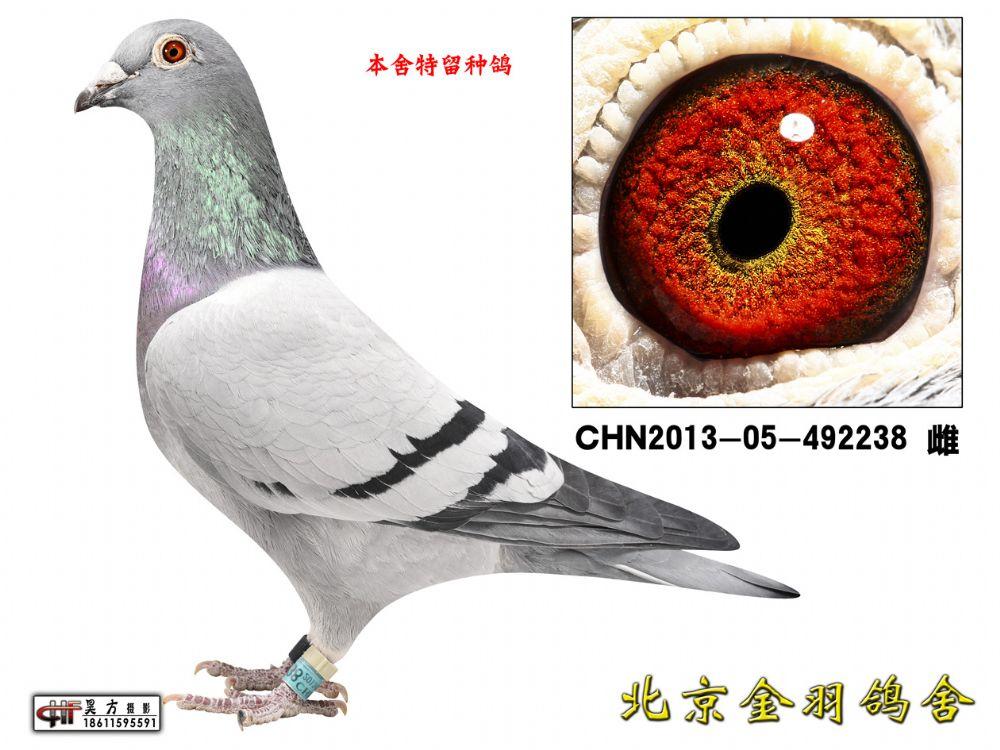 65 CHN2013-05-492238 雌