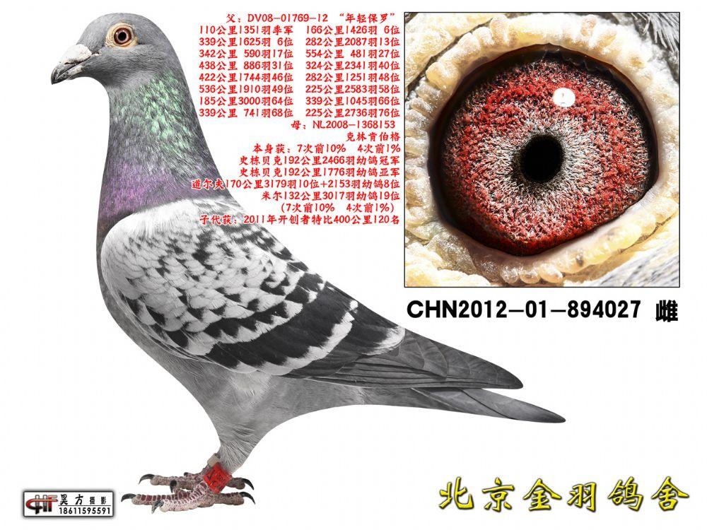 76 CHN2012-01-894027 雌