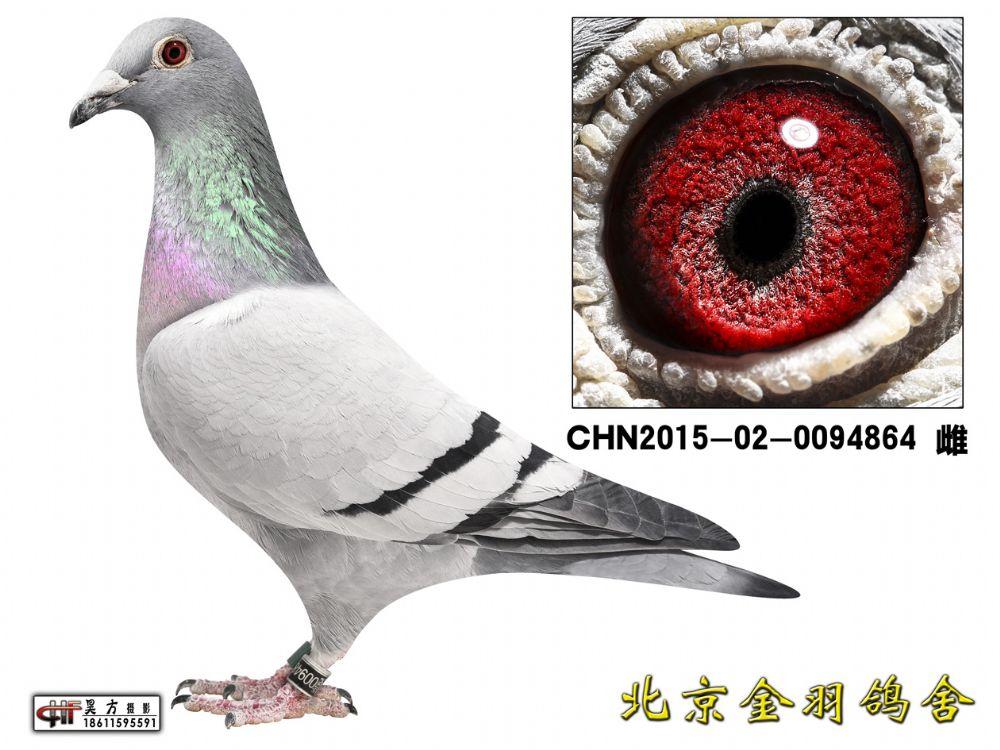 104 CHN2015-02-0094864 雌