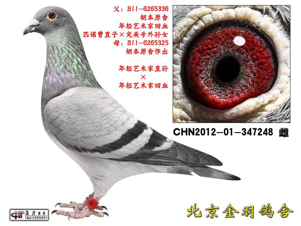 105 CHN2012-01-347248 雌