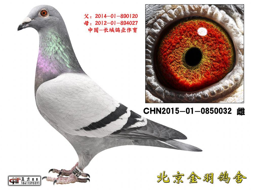 112 CHN2015-01-0850032 雌
