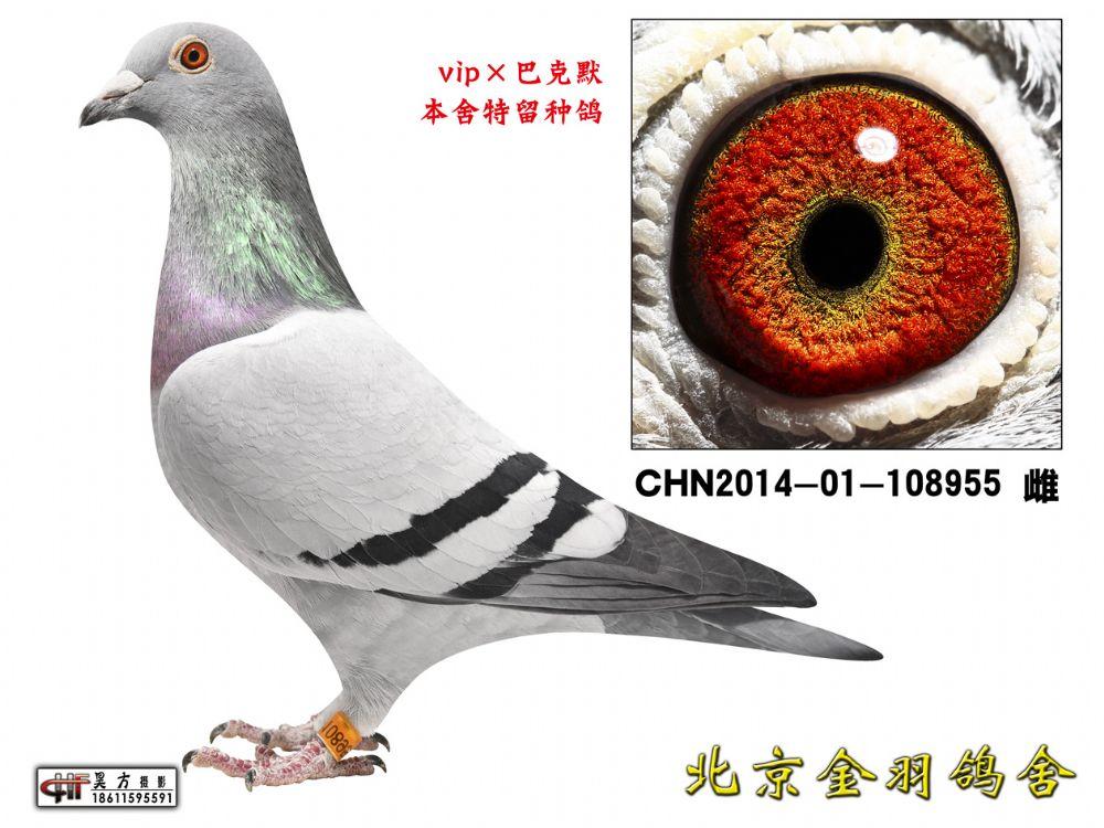 132 CHN2014-01-108955 雌