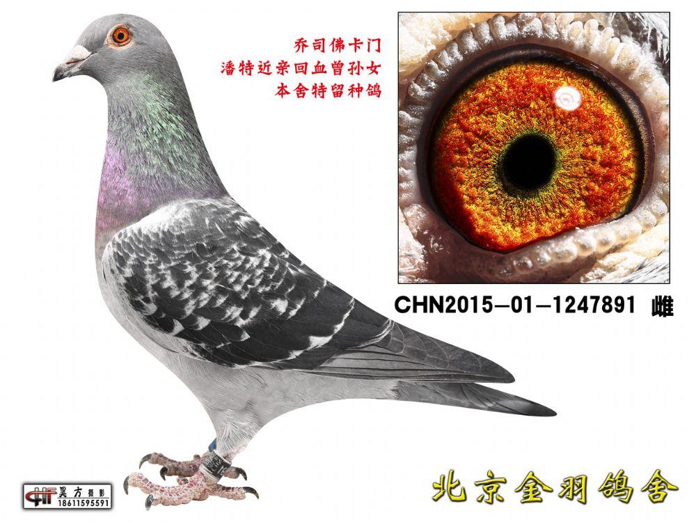 139 CHN2015-01-1247891 雌