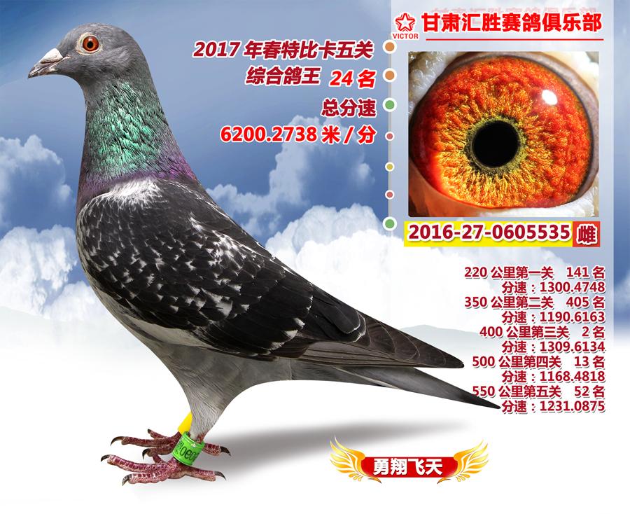 五关鸽王24名