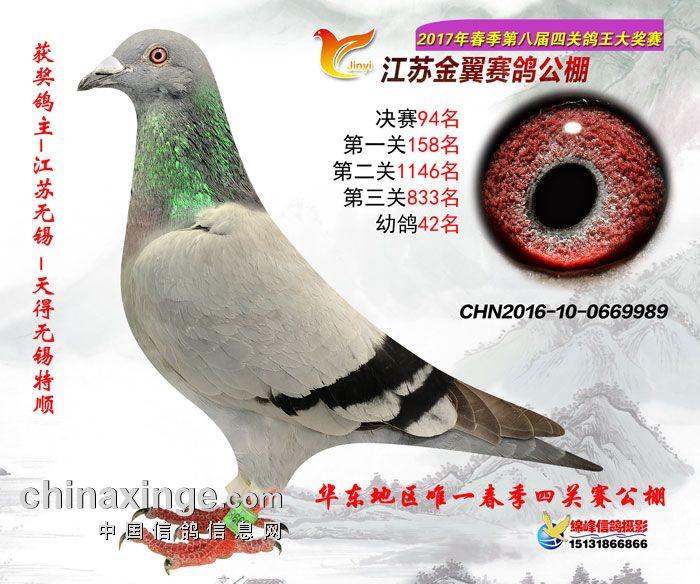 2017年春江苏金翼公棚决赛94名