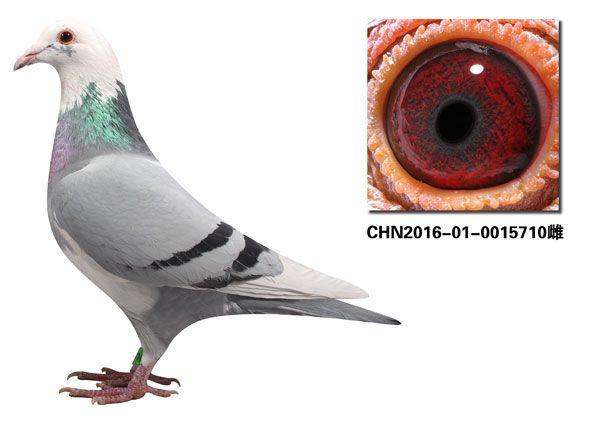 CHN2016-01-0015710
