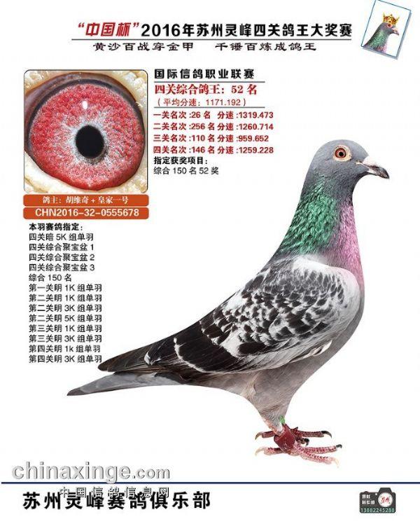 灵峰四关【鸽王52名】