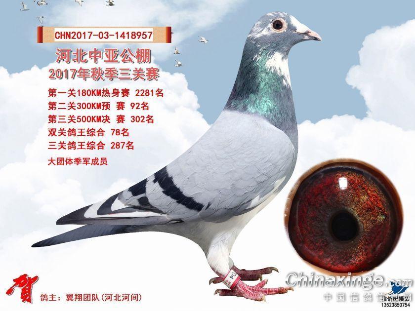 中亚公棚302名