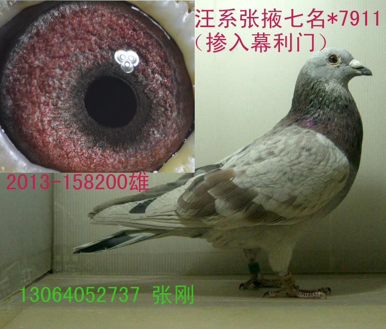 汪系(吴淞)7911*张掖7名(售北京)