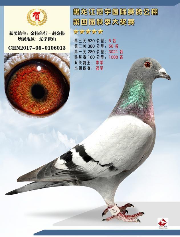 冠宇国际赛鸽公棚决赛5名双关鸽王季军