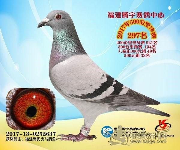 郭氏天马637