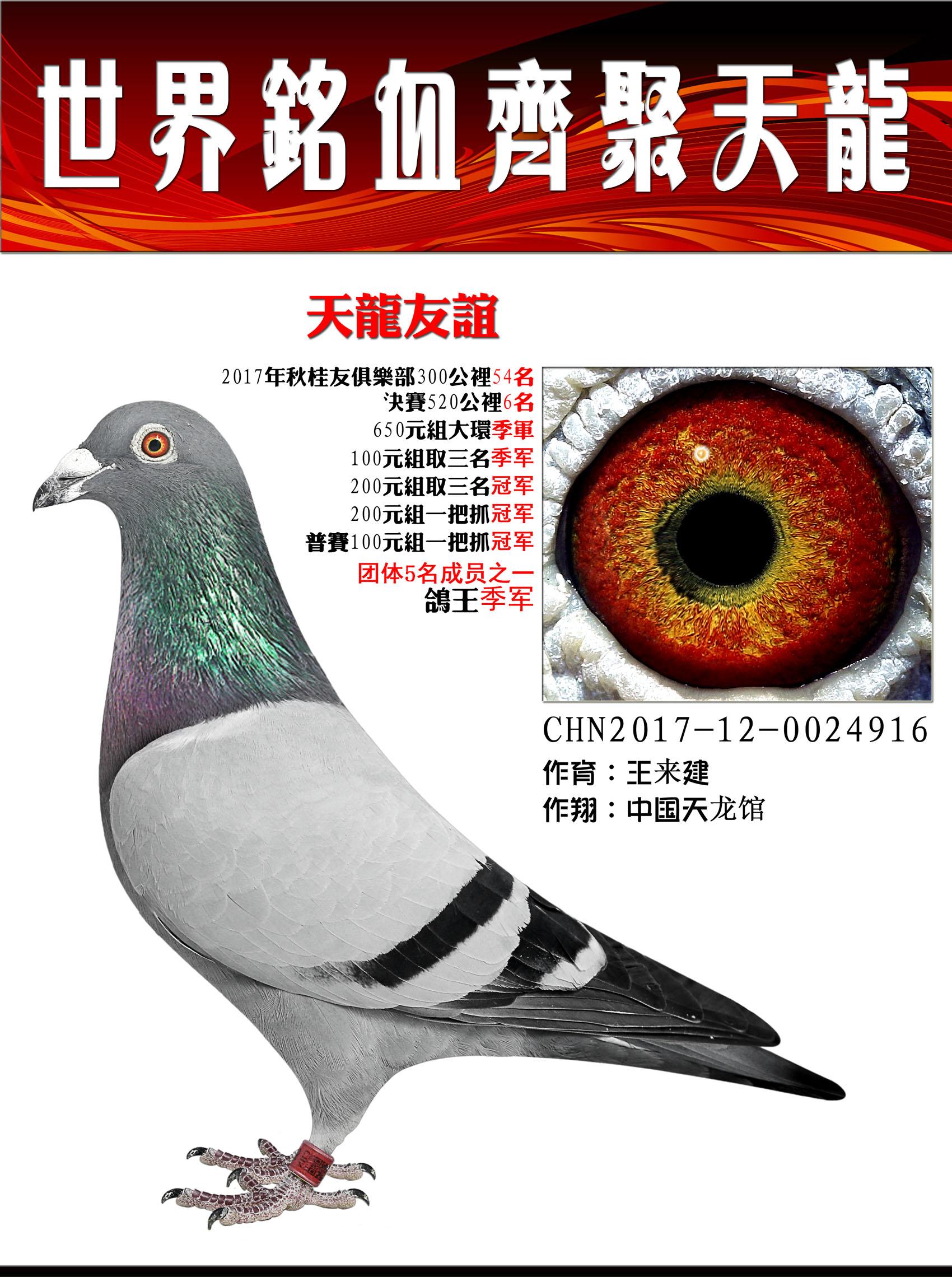 鸽王季军/天龙友谊