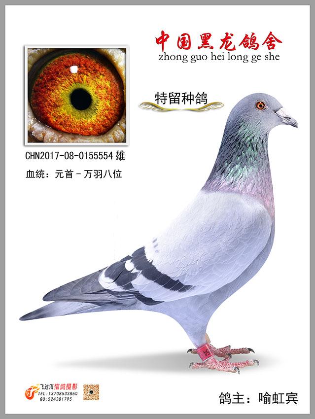 动物鸽鸟类教学图示鸟美女639_850竖版竖屏鸽子蟒蛇生吞图片图片