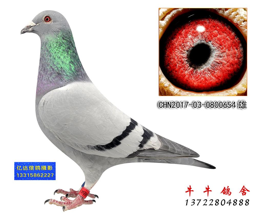 涿州卡普331名