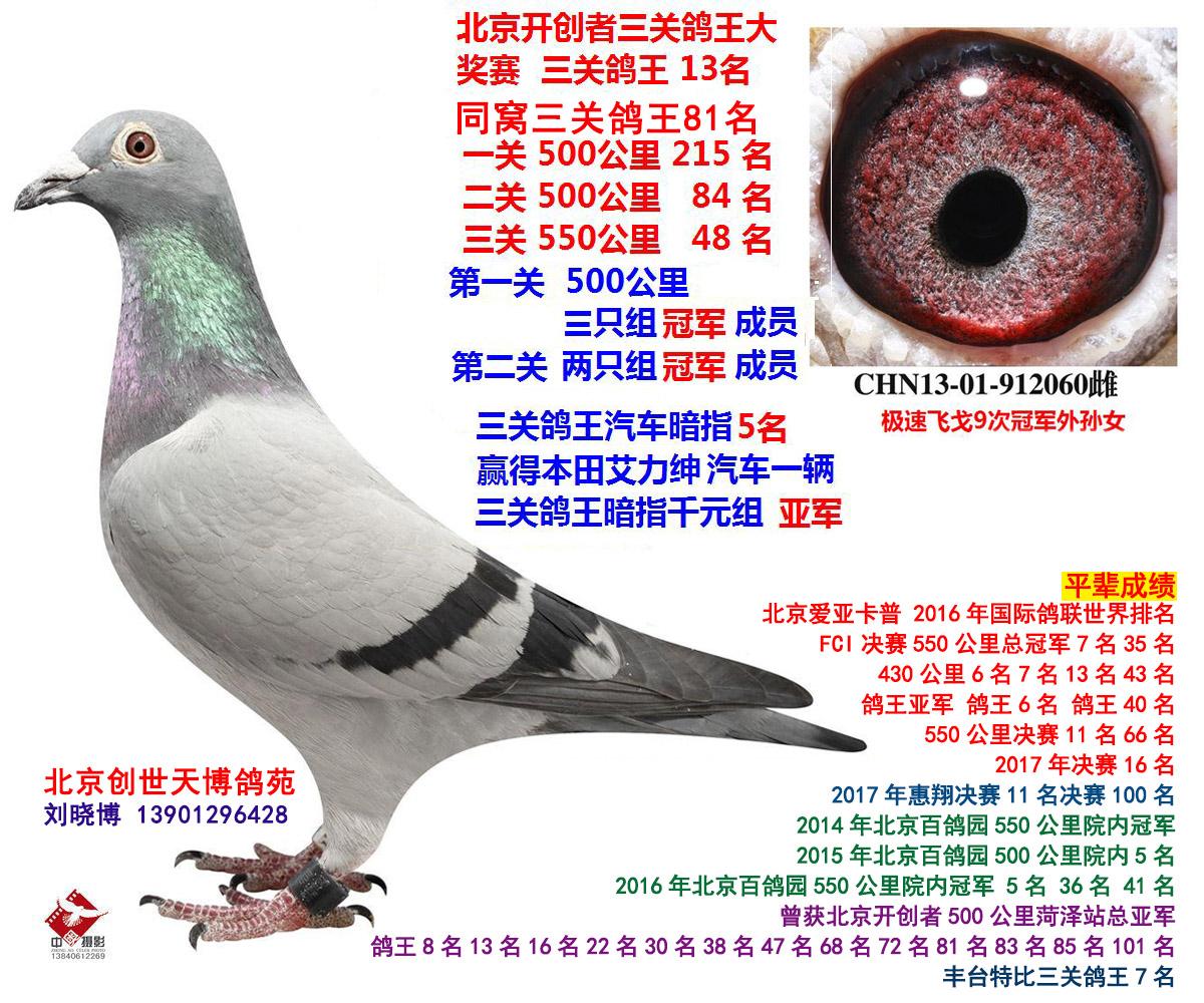 北京开创三关鸽王13名 极速飞戈外孙女