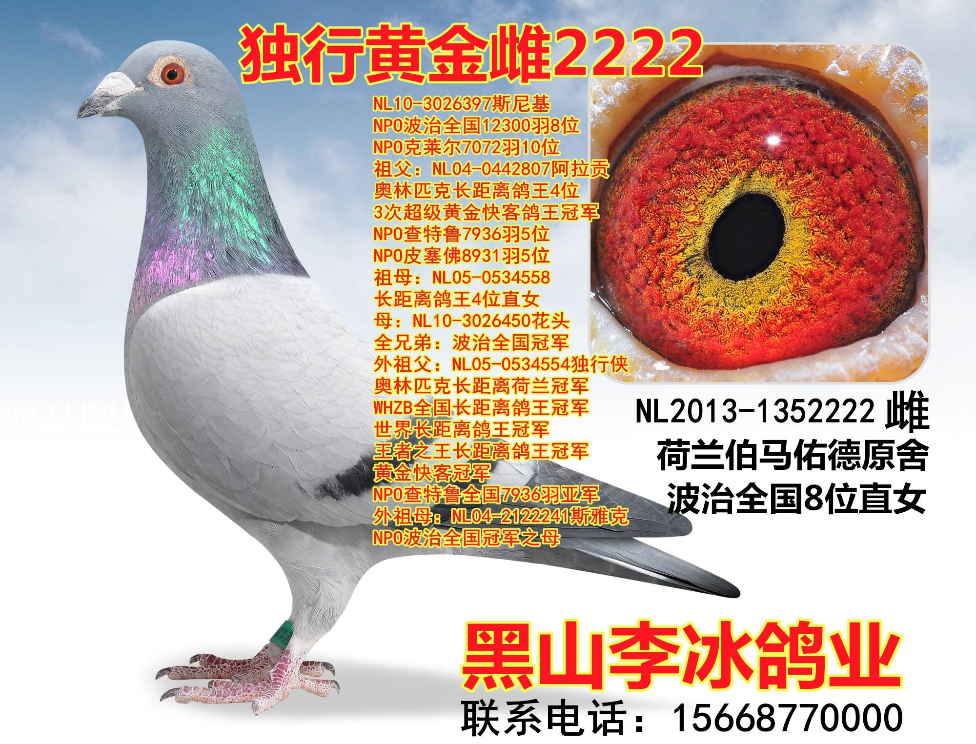 詹吉-独行黄金雌2222