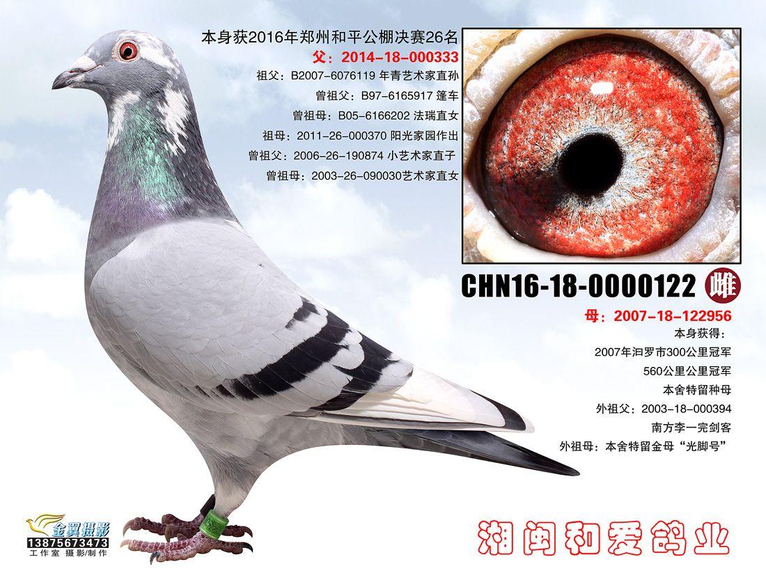 2016郑州和平公棚决赛26名