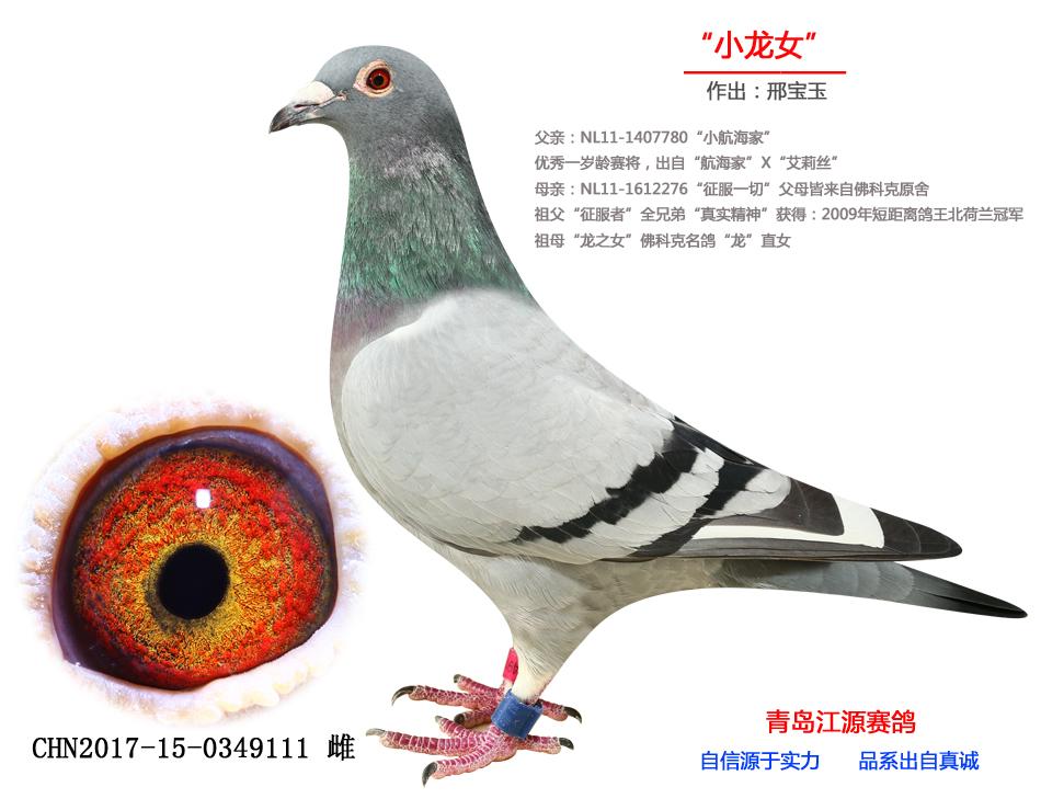 """""""小龙女""""齐鲁1号半妹"""