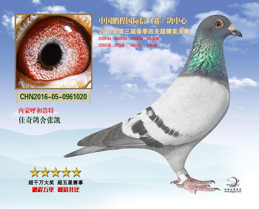 四川鹏程国际赛鸽公棚决赛158名