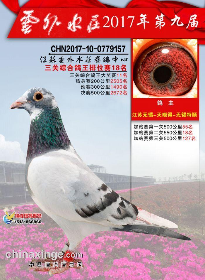 17秋云外水�f三关综合鸽王排位赛18名