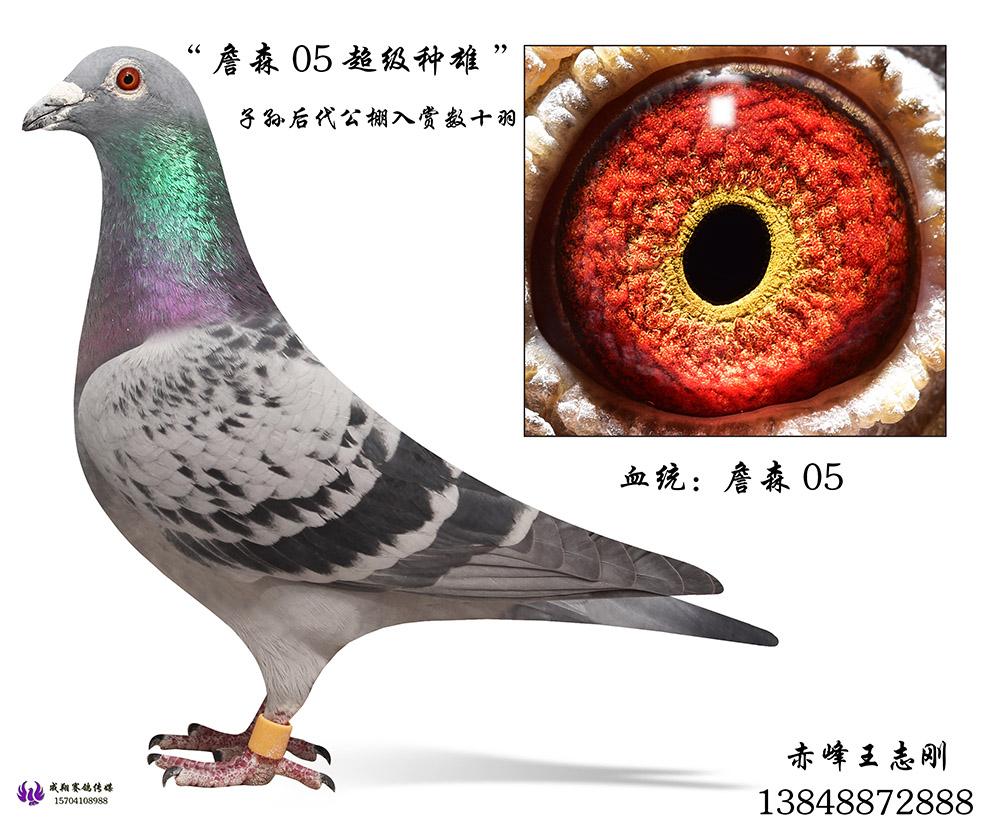 詹森05种雄