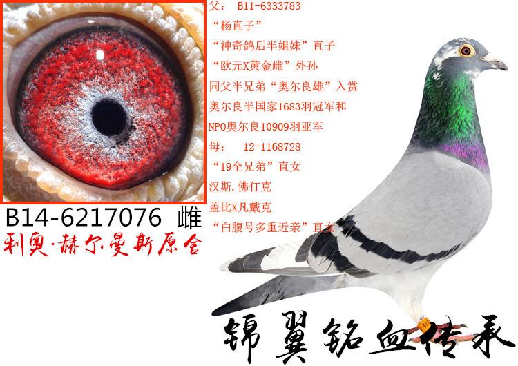 杨直孙女076