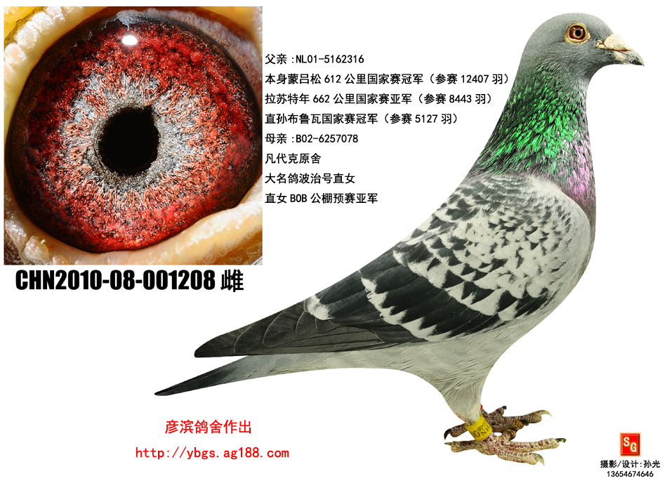 相关图片 picture 信鸽特征                  编 号: 276931