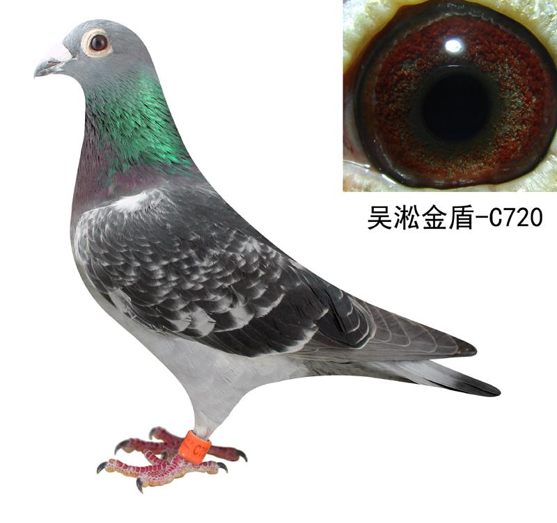 吴淞园头--720