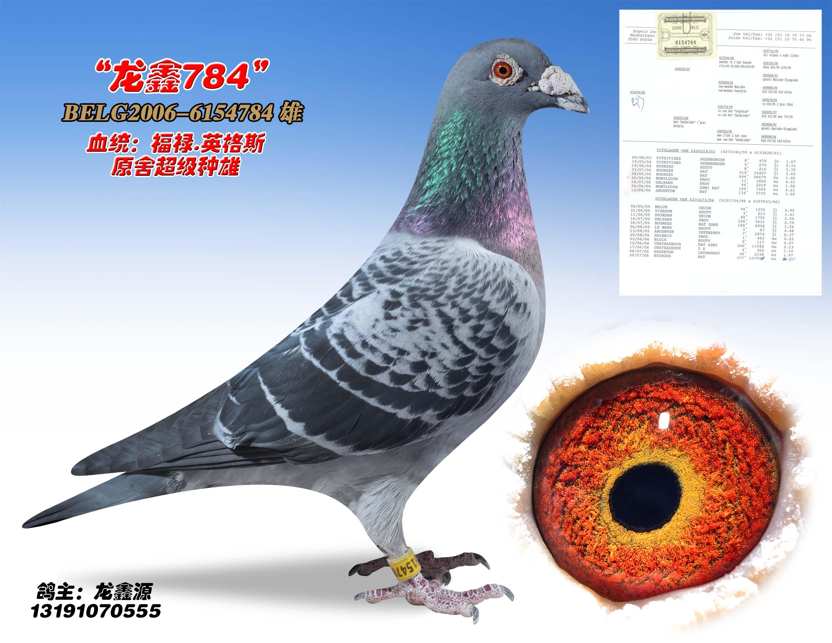 龙鑫784