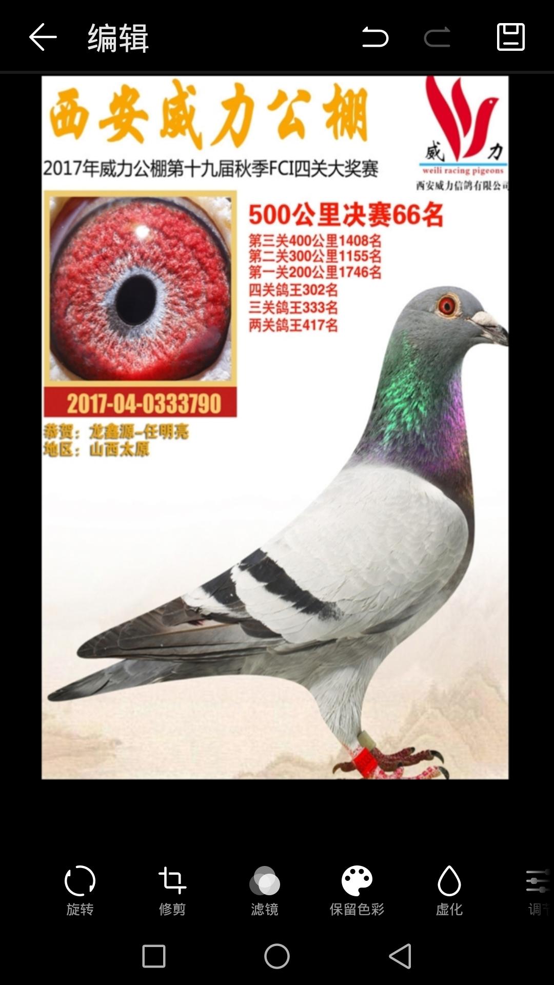 龙鑫790